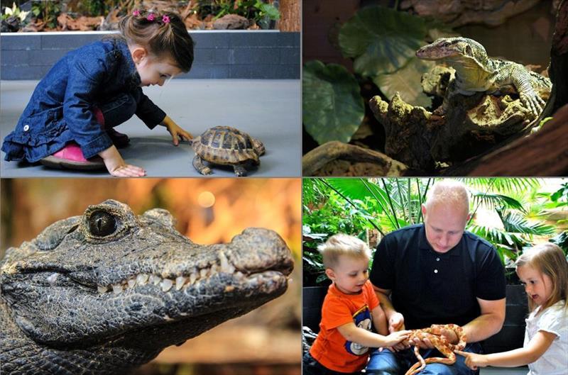 Vakantiehuis te koop Noord-Brabant Heeswijk Dinther Laverdonk 5 Breda Reptielenhuis