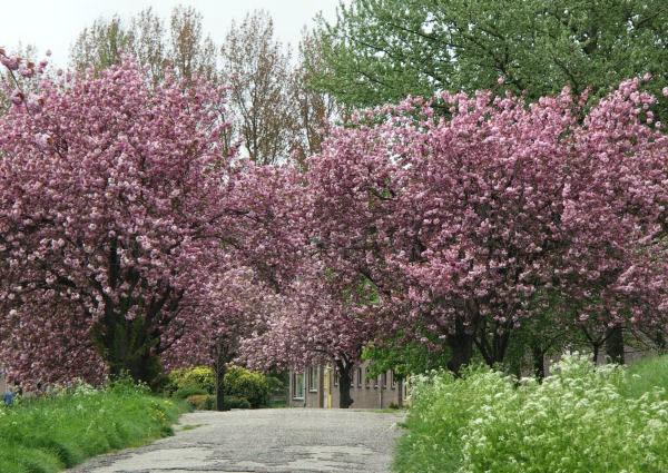 Vakantiehuis te koop Gelderland Oosterhout Residence Tergouw Betuwe Bloeiende Fruitbomen